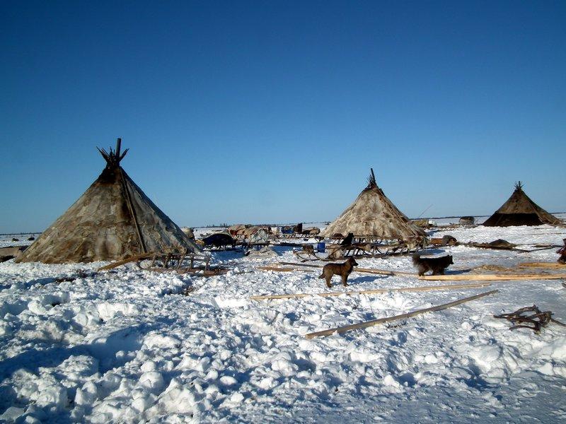 Chums on the Yamal Peninsula