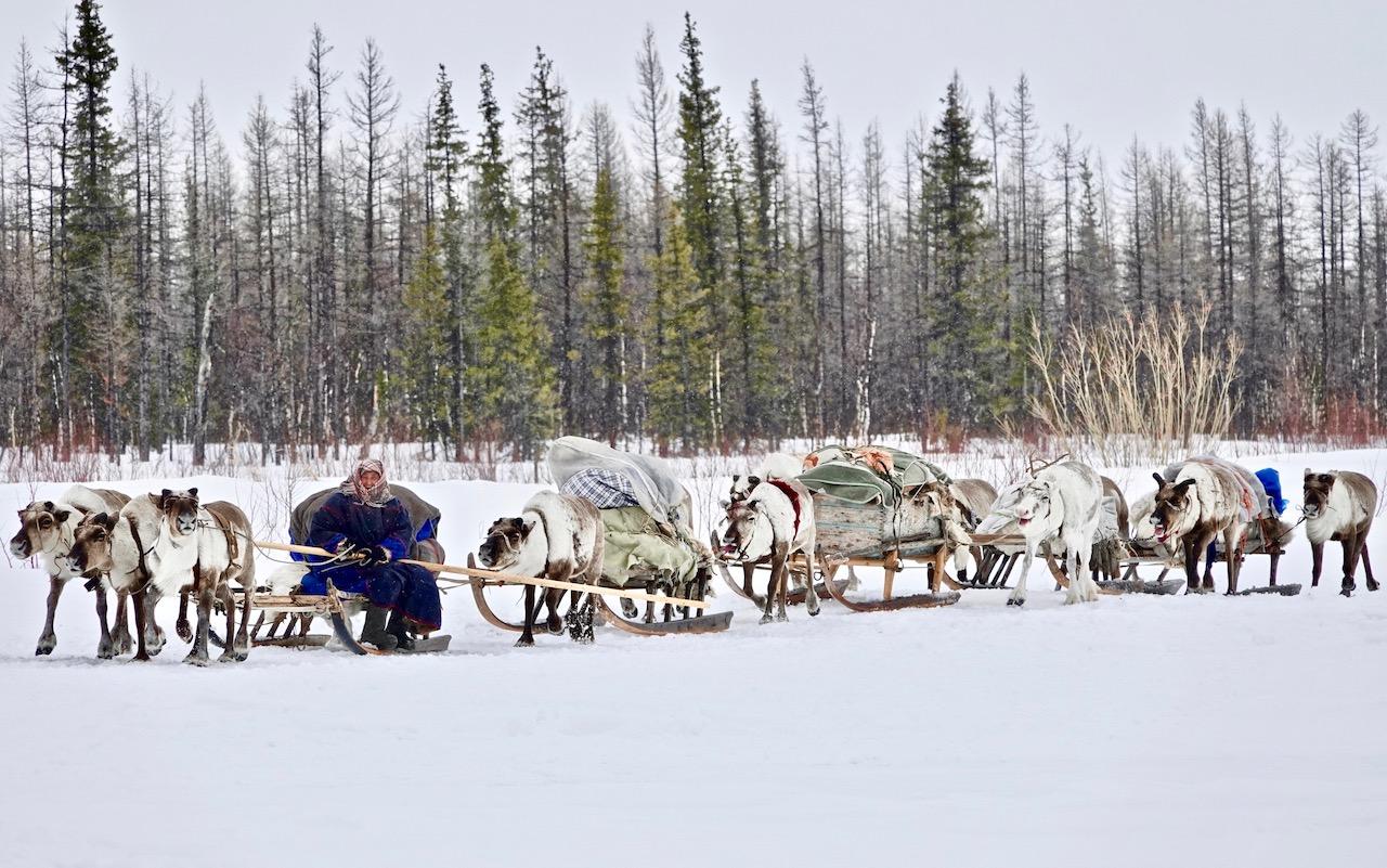 Nomadic migrations on the yamal Peninsula