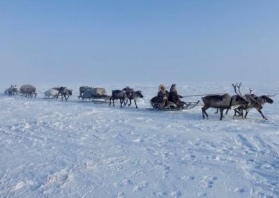 Seyakha Nenets migrating