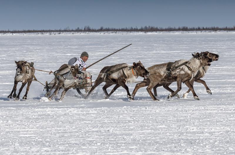 Reindeer herders' festivals on the Yamal Peninsula