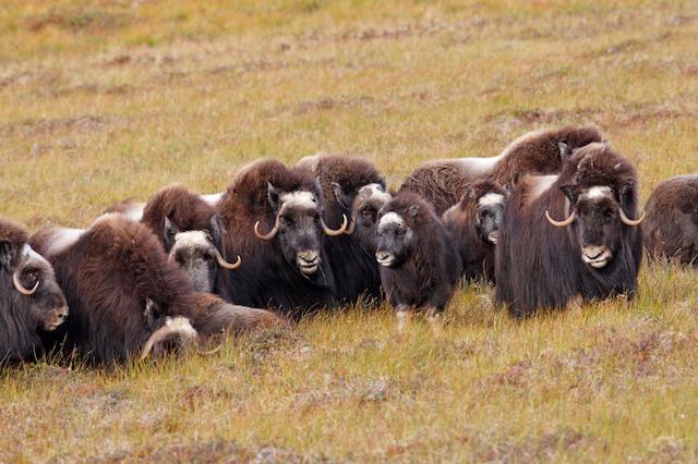 Wildlife on the Yamal Peninsula